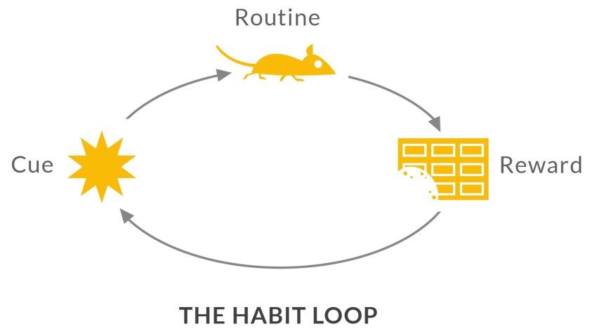 5 habit loop