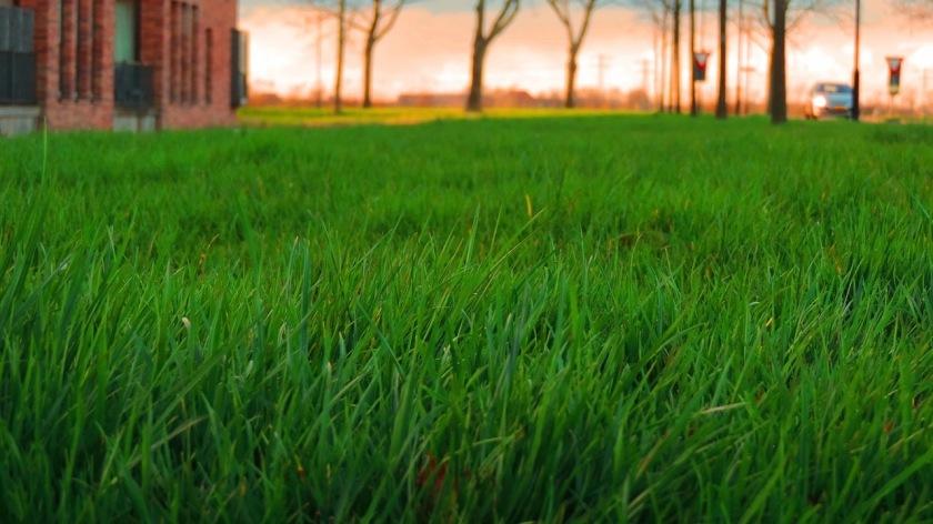 lawns-293541_1280